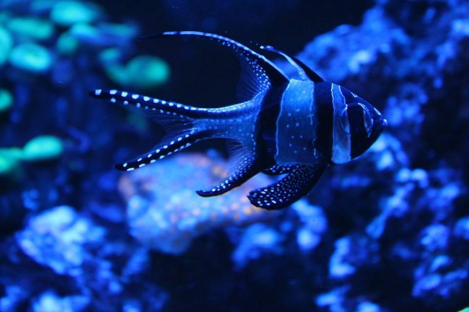 Contaminación por nitrógeno estaría destruyendo los corales (azteca noticias)