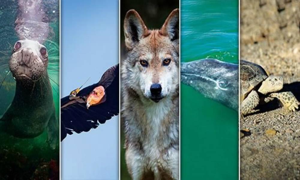 Más de 28 mil especies están en peligro de extinción (adn40)
