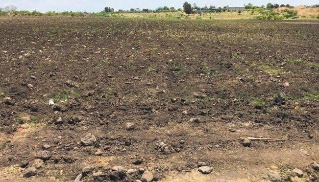 San Luis Potosí: Emiten declaratoria de desastre natural para sector agrícola (El Universal)