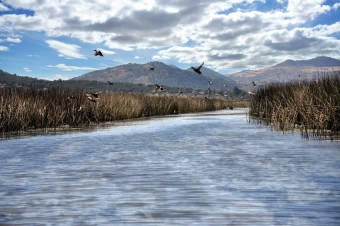 CDMX: El IPN recupera el último humedal del Valle de México (La Jornada)
