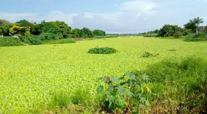 Tampico: Oseguera al Rescate de Lagunas (El Sol de Tampico)
