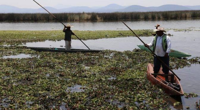 Hidalgo: Proyecto de socioecogestión del IPN busca recuperar humedal continental (La jornada)