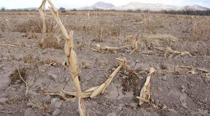 San Luis Potosí: La Huasteca, azotada por sequía severa (Pulso)