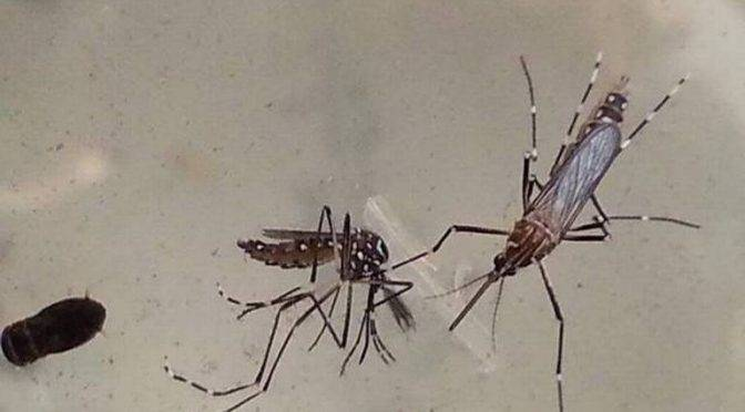 Baja California: Ven potencial brote de dengue (La voz)