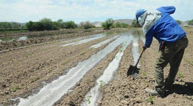 Ciudad Lerdo: Módulo de Riego 03 recupera totalidad de volumen de agua rodada (Noticias de el Sol de la Laguna)