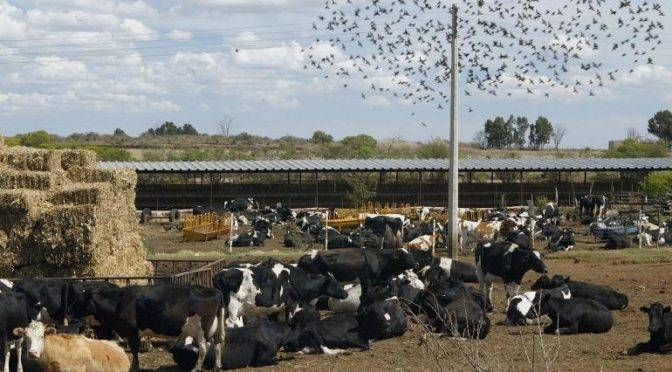 México: Ahora, bloque agropecuario celebra acuerdo del río Verde (informador.mx)