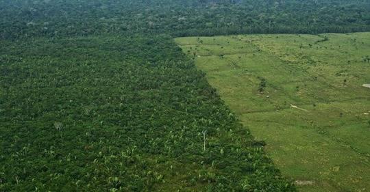 Brasil: Cada minuto la destrucción del Amazonas avanza (CCN)