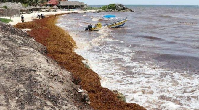 Selvas y ríos de Q. Roo se convierten en tiraderos clandestinos de sargazo (El Sol de México)