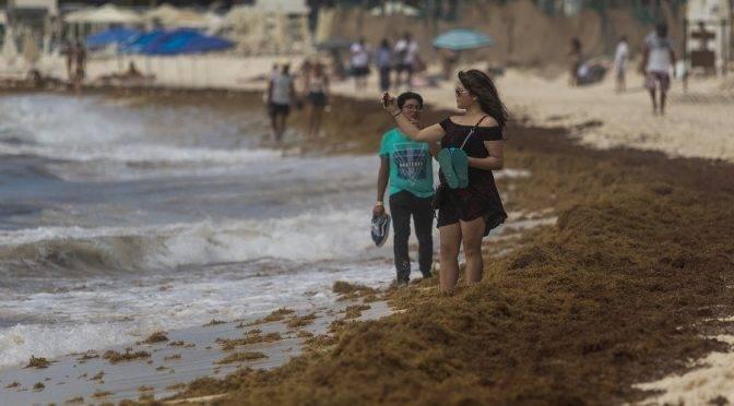 Quintana Roo: las claves de por qué el sargazo se ha convertido en la epidemia del Mar Caribe (Animal político)