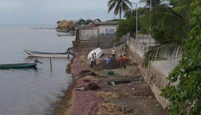 Oaxaca: Alga que llega al Golfo de Tehuantepec no es sargazo, dice experta (El Universal)