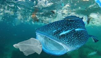 CDMX: Los plásticos, una trampa mortal para la fauna marina (El día)