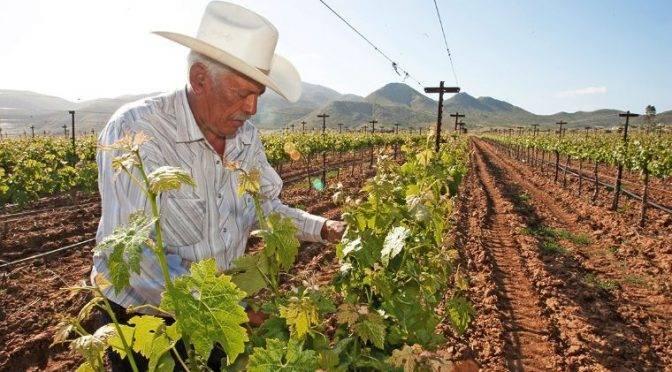 Baja California: Escasez de agua, principal reto de la industria vitivinícola (El Economista)