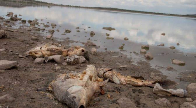 Zacatecas: Falta de agua, causa de muerte de los peces de La Zacatecana (Imagen Zacatecas)