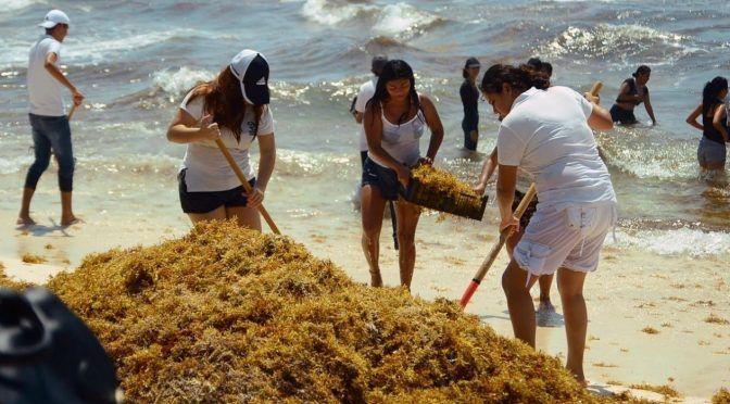 """Quintana Roo: """"Iktan"""", el nuevo vehículo para recolectar sargazo creado por estudiantes del IPN (El Financiero)"""