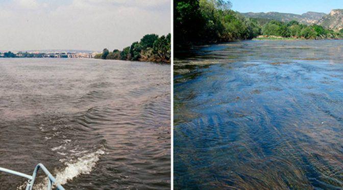El tratamiento de las aguas provoca cambios en la flora y fauna de los ríos (El País)