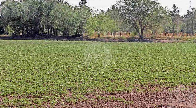 Guanajuato: Buscan dar más agua a agricultores de El Valle (El Diario.mx)