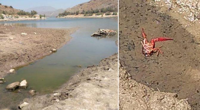 Baja California Norte: captan flujo de aguas negras de Valle de San Pedro a Presa El Carrizo (Unimexicali)