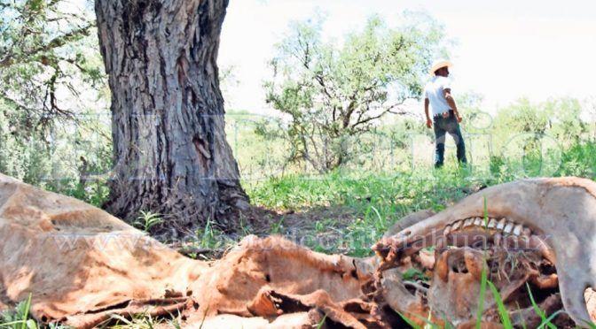 Chihuahua: Piden declaración de emergencia por falta de lluvias en el campo  (Diario.mx)