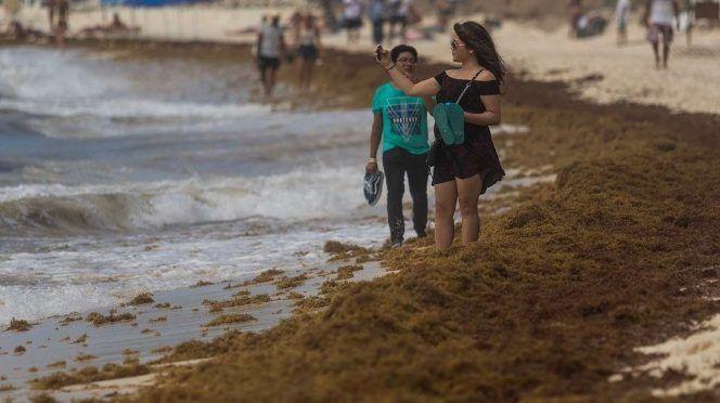 CDMX: Sargazo no contamina aguas ni daña al ser humano: Semar (Excelsior)