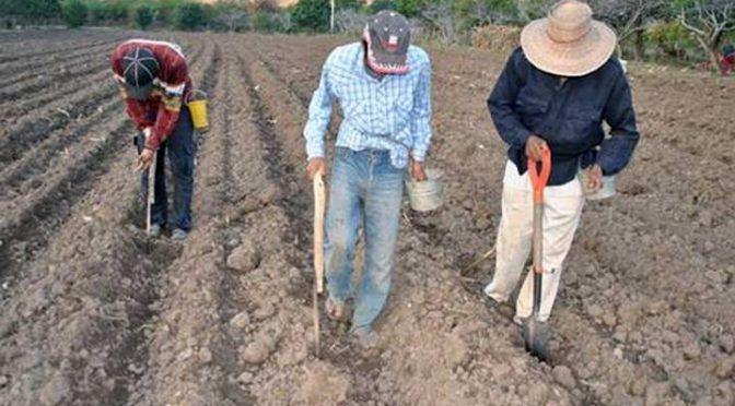 Durango: Destinan 35 mdp para semillas por falta de lluvias (Imagen Radio)