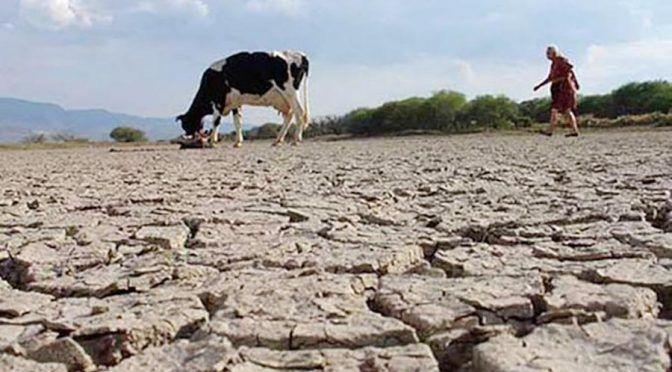 Veracruz: Sequía deja en crisis a ganaderos (El Heraldo de Veracruz)