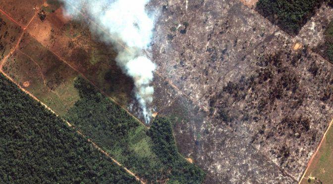 ¿Cuál es la importancia del Amazonas? 5 claves del paraíso en llamas (Infomediatico)