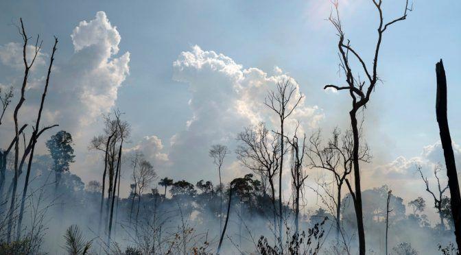 Pérdida de agua una de las consecuencias que dejan incendios en la Amazonía (Diario de Yucatán)