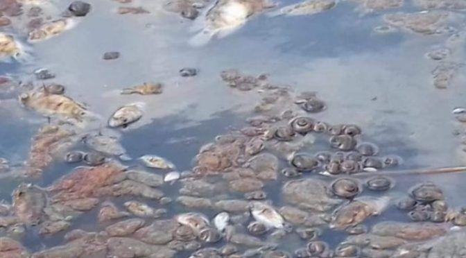 Tabasco: Mueren peces por derrames en lagunas de Nacajuca (Tabasco Hoy)