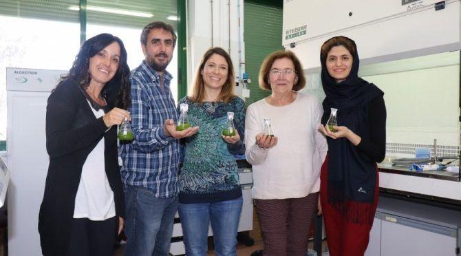 España: Algas y bacterias para descontaminar aguas residuales de forma ecológica (NCYT)
