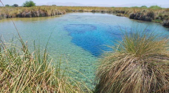 Coahuila: Piden estudios para rescatar humedales (El Siglo Coahuila)