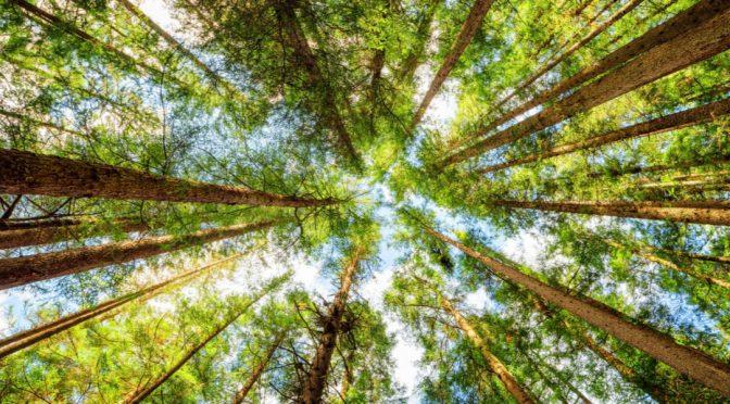 Los árboles usan el agua de manera más eficiente por el cambio climático (El Ágora)
