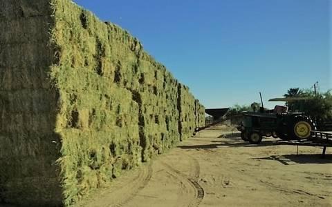 Chihuahua: aumenta sequía precio de forrajes (El Sol de Parral)