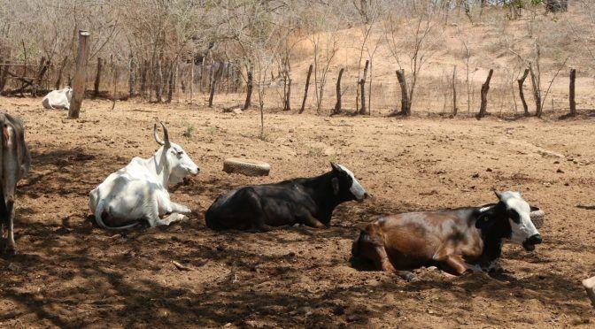 Sinaloa: Despiden ganaderos de Concordia la sequía que tanto afectó (Línea Directa)