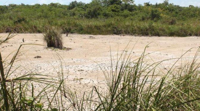 Provoca intenso calor la sequía de 2 humedales en Quintana Roo (Palco Quintanarroense)