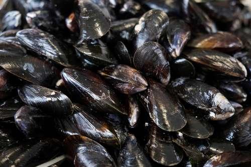 El mejillón, superfiltrador marino: arrasa con microplásticos, pesticidas y bacterias (La Jornada)