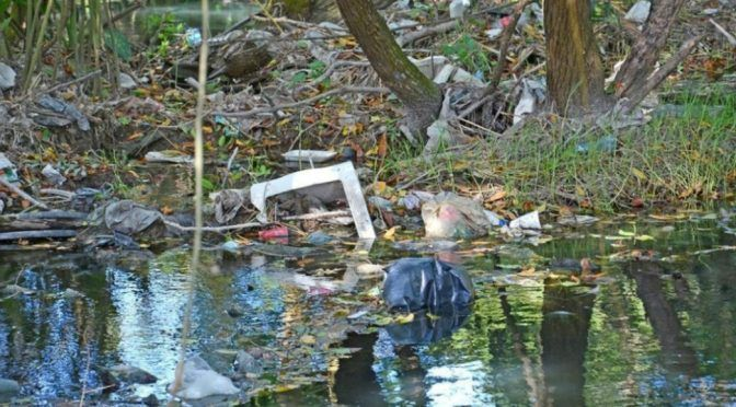Yucatán: Implementan acciones de limpieza en manglares de Yucatán (Noticieros Televisa)