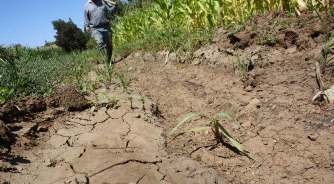 La falta de agua pone en predicamento a los productores del sur de Sonora (Tribuna)