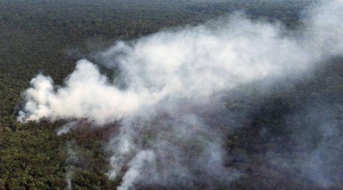 Incendios en el Amazonas dejarán enfermedades, menos agua y extinción (Publimetro)