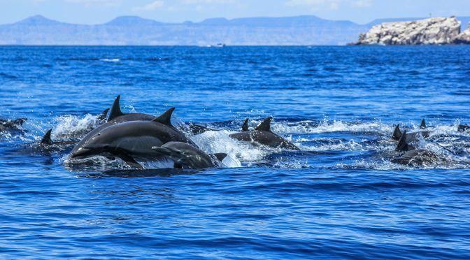 CDMX: La supervivencia de los mamíferos marinos (Academia de Ciencias)