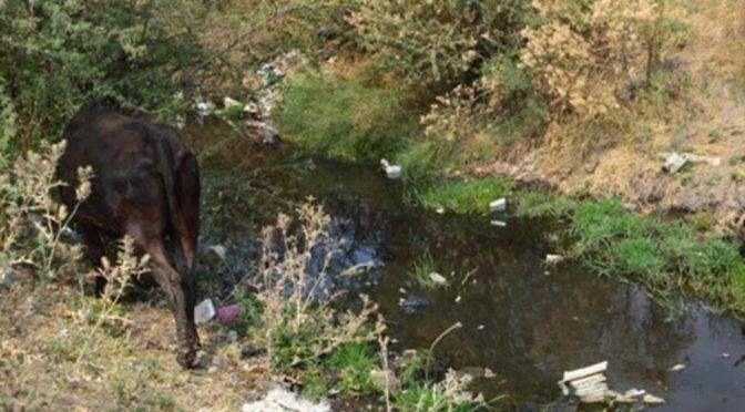 Guanajuato: Empresas contaminan los ríos de la región (La silla rota)