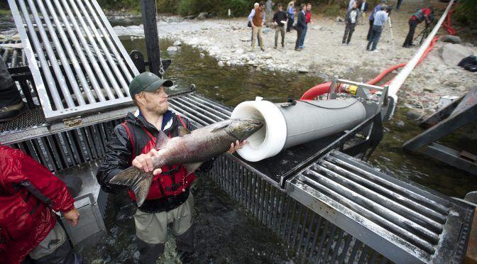 Estados Unidos: Cañón de peces: ¿Cómo funciona el invento que ha conquistado Internet? (EcoDiario)