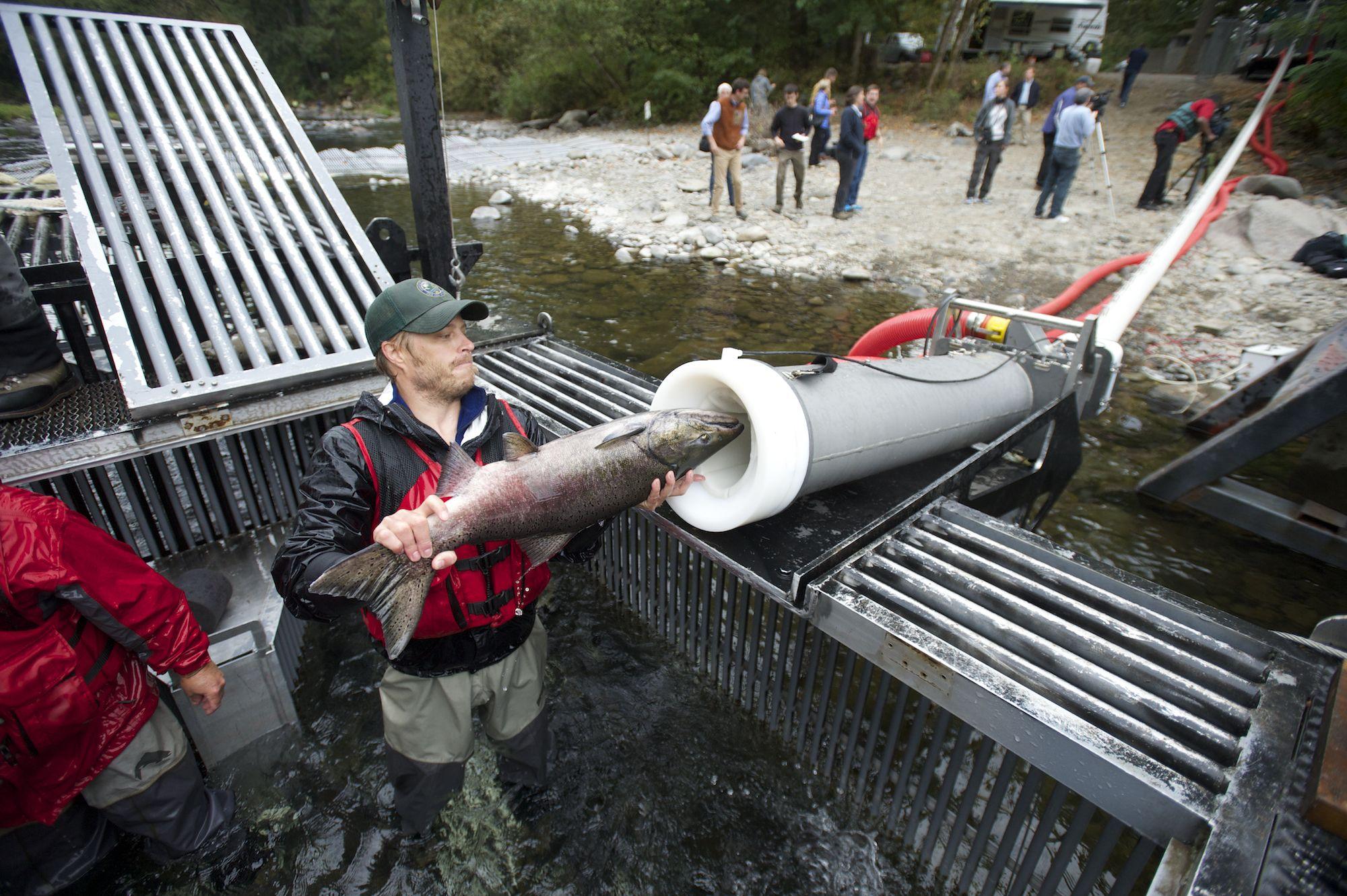 Baja California Sur: Pesca imposible en BCS… ¡capturan un salmón!(Excélsior)