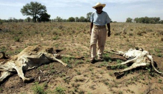 Tamaulipas: Pierden ganado por la sequía (El mañana)