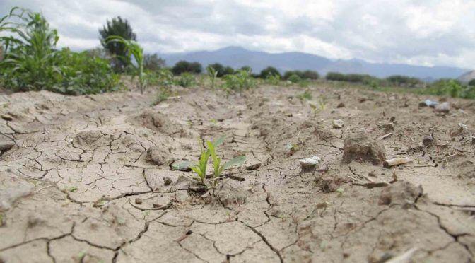 Veracruz: Istmo de Tehuantepec sufre una sequía severa (Vanguardia)