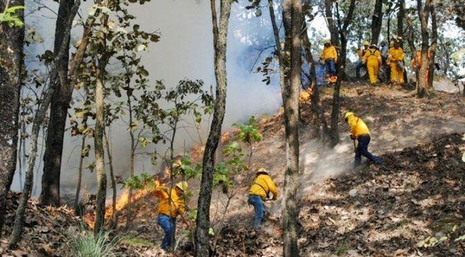 Chetumal: Controlan al 95% incendio en reserva Sian Ka´an (La Jornada)