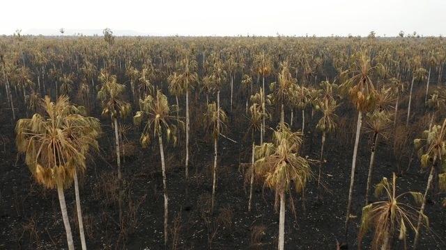 Brasilia: Descartan que lluvias apaguen incendios en el Amazonas (La Jornada)