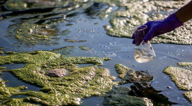 Estocolmo: SIWI condena el aumento de la violencia contra activistas del agua (World Water Week)
