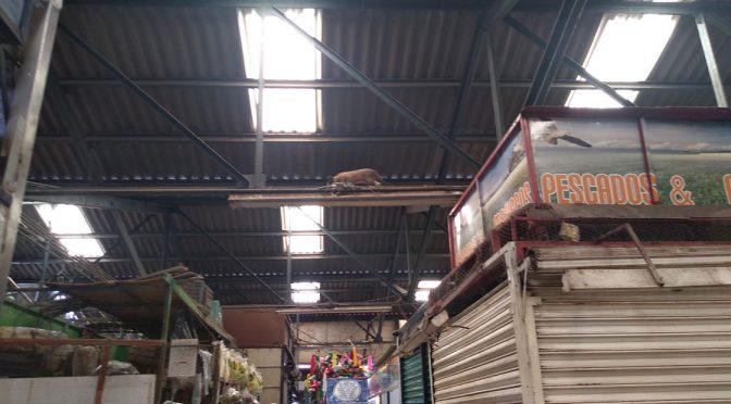 Guanajuato: Trabajan sin agua en el Mercado Tomasa Esteves (Periodico Correo)