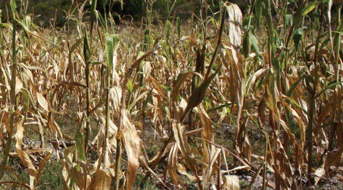 Durango: Prevén crisis por falta de agua y recursos (El Siglo de Torreón)