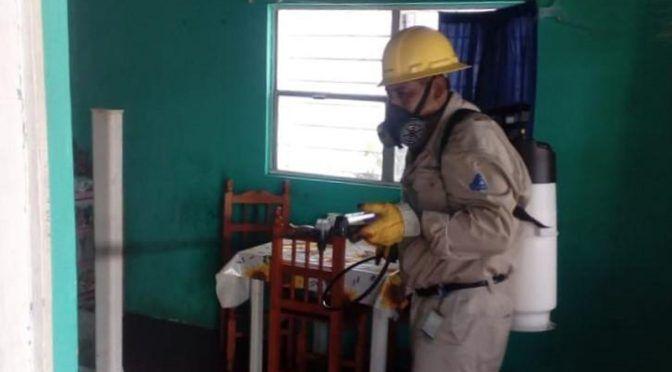 Veracruz: SS combate dengue, zika y chikungunya en San Andrés Tuxtla, Oluta y Hueyapan (La jornada)